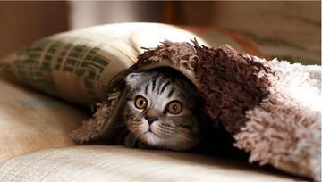 ¿Qué es el rebote del gato muerto?