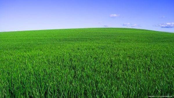 Green washing y  greenium, dos términos que añadir al diccionario ISR