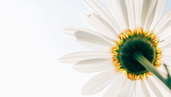 Diez razones por las que vale la pena invertir con criterios ASG