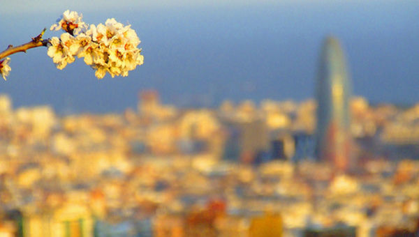 Mapfre gesti n patrimonial abre en barcelona su primera for Oficinas mapfre madrid capital